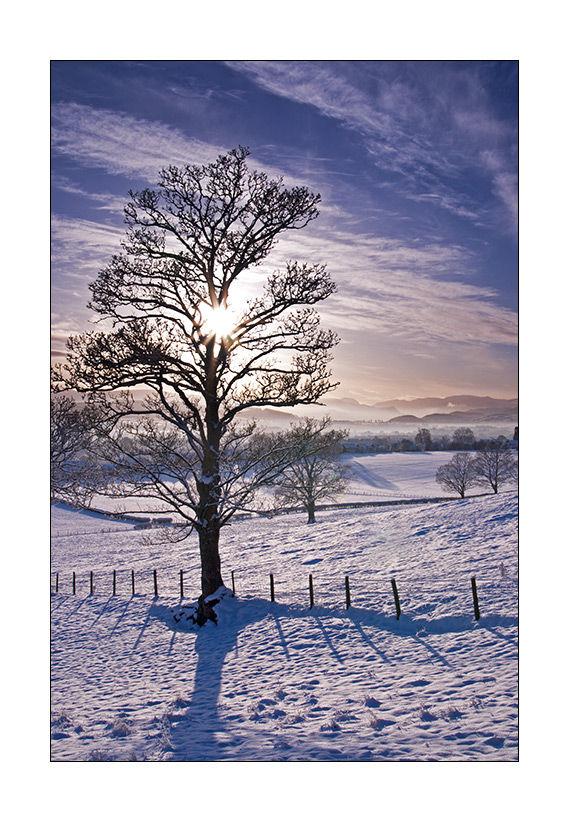 tree silhoutte in a snowy landscape