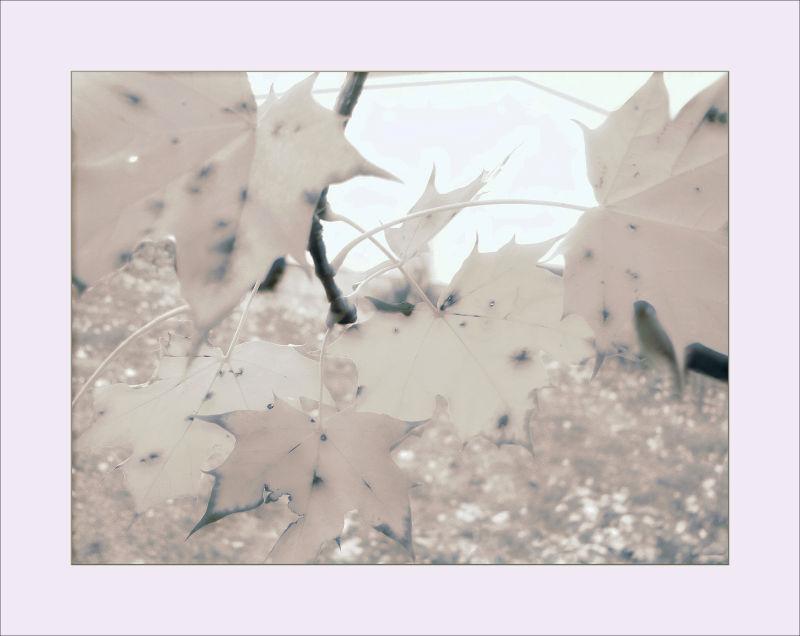 Autumn's fingerprints