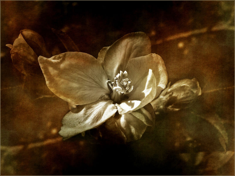 My Wild Flower
