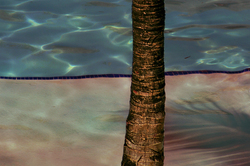 Palm Tree at Pool