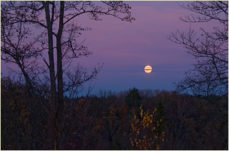 moonrise over forest