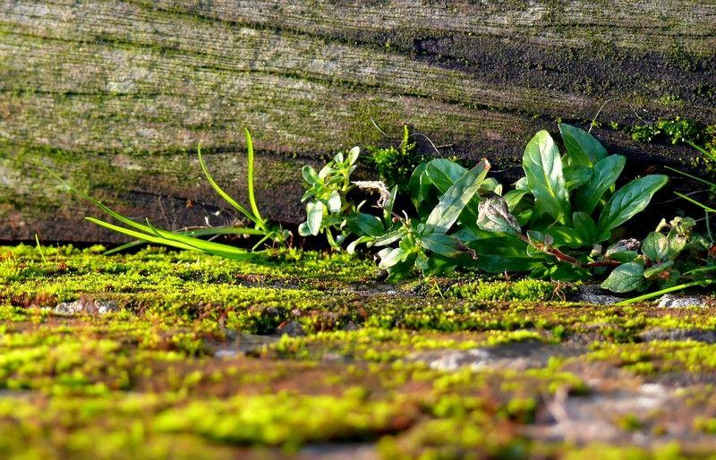 Suivre la piste des idées vertes