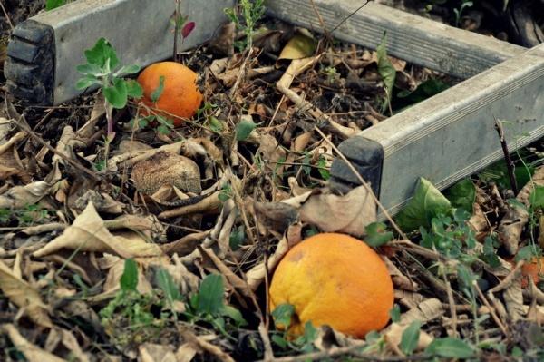 A l'ombre des orangers