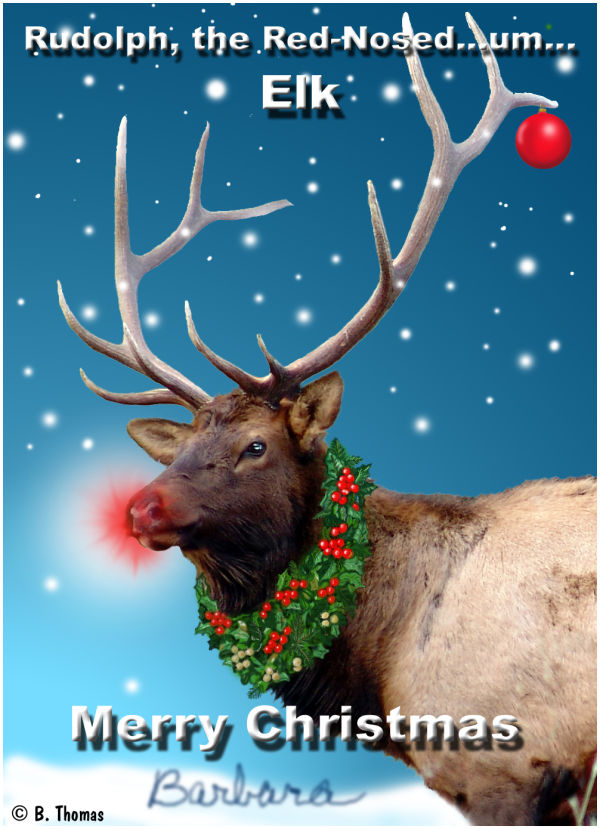 Rudolf the Red Nosed...Elk?