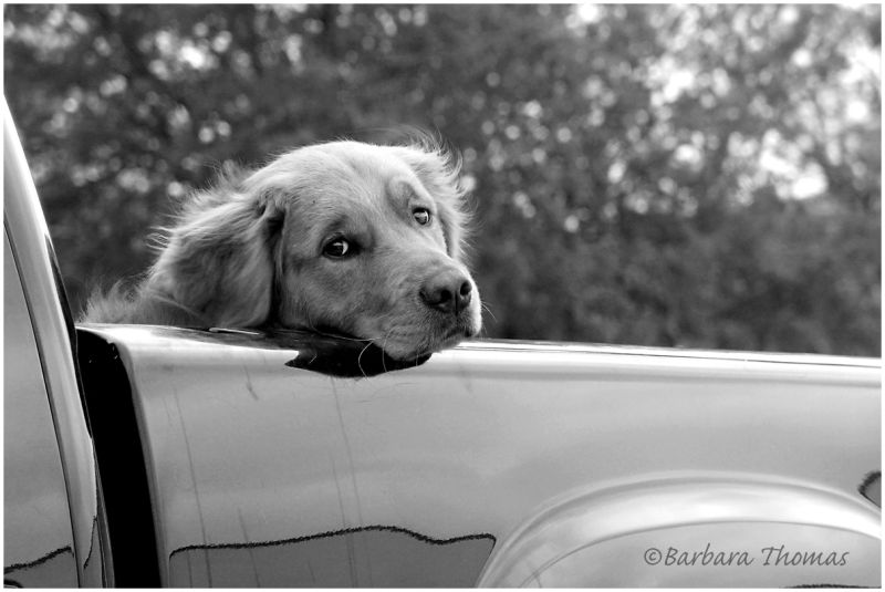 So Texan: A Truck & A Dog