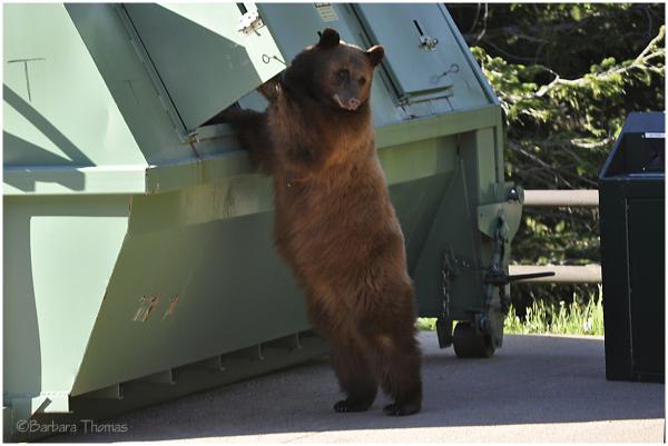 Bear-Proof?
