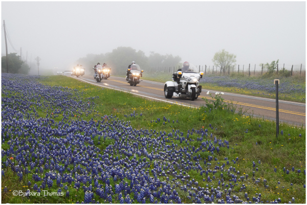 Bikers Love Bluebonnets Too