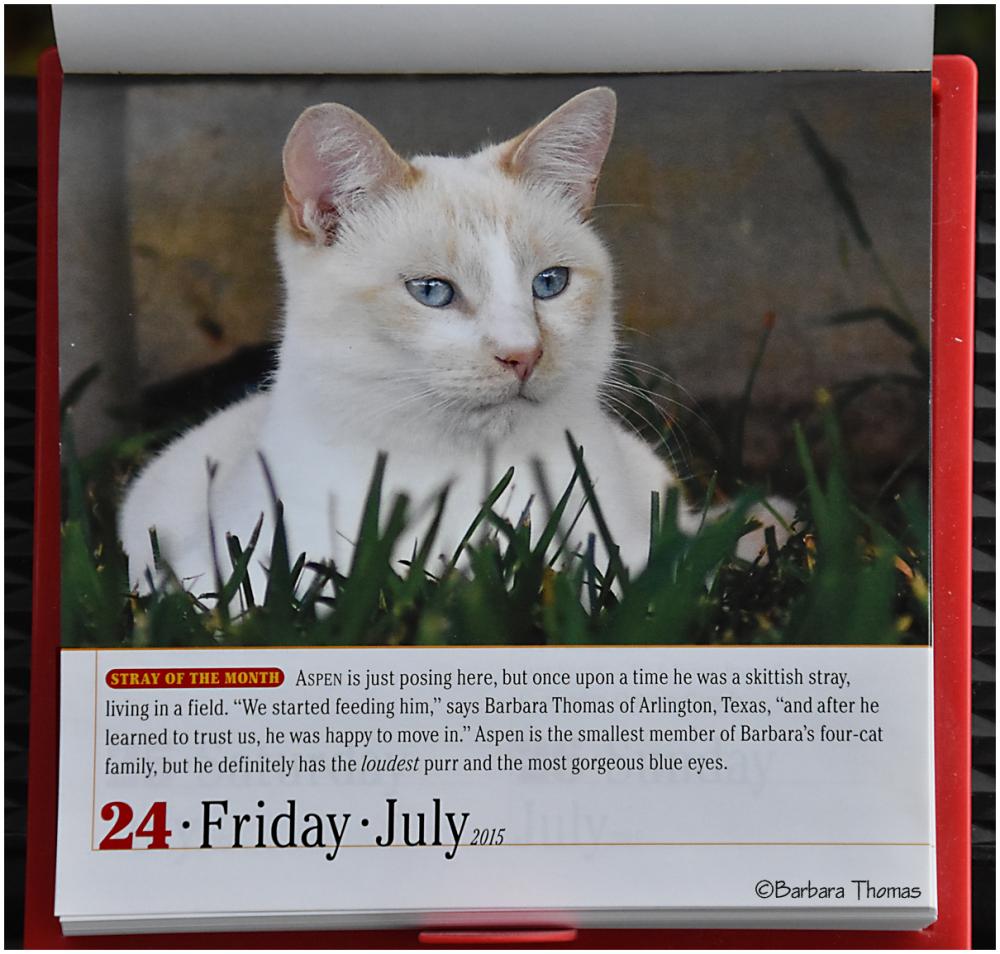 Mr. July 24th - Calendar Boy