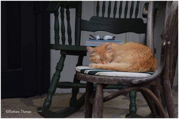 Porch Nap