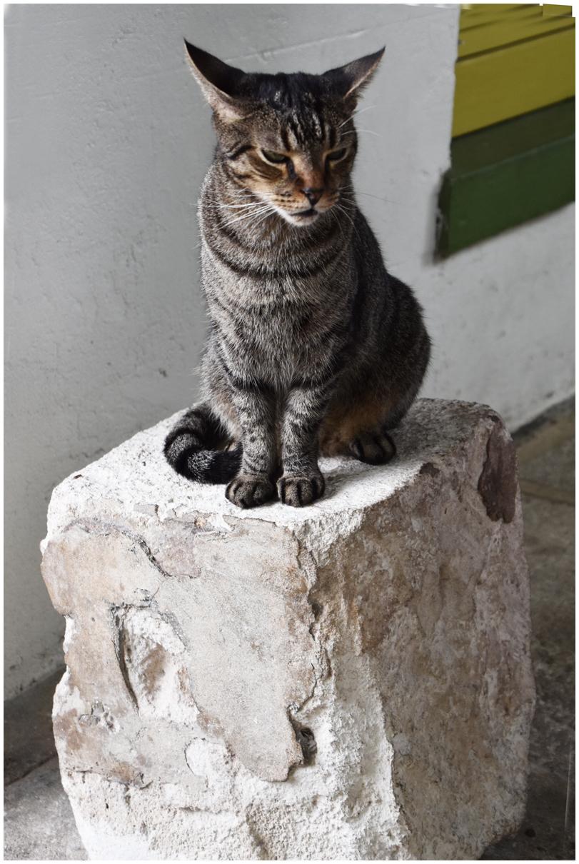 Hemingway Cat - 5
