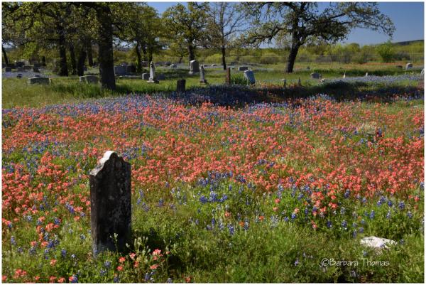 Board Branch Cemetery
