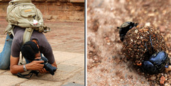 Dung Beetle & Me