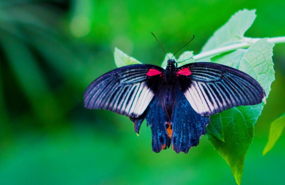 Sayn, Garten der Schmetterlinge