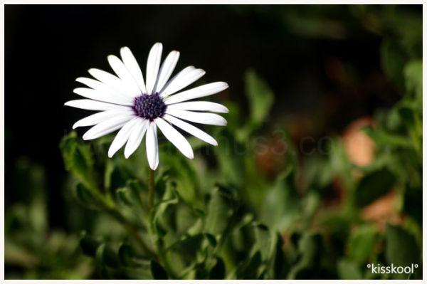 fleur dans la nature (aout 2009)