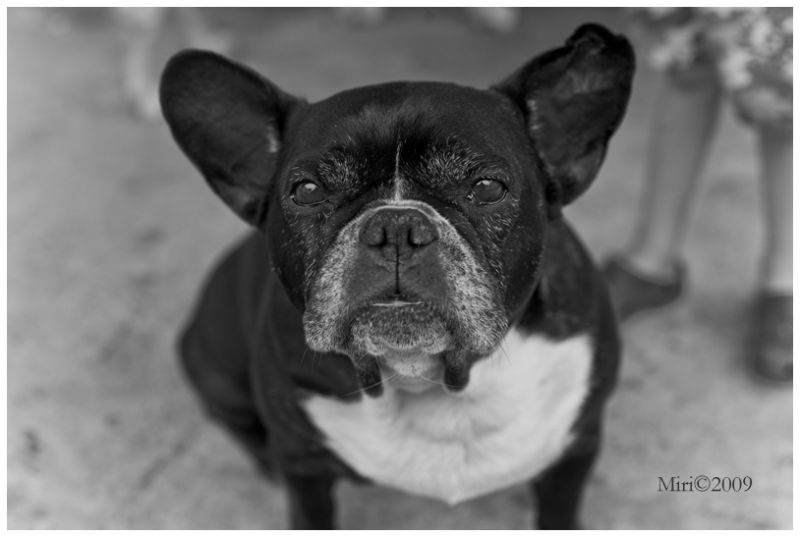 Molly, Friends house, French bulldog