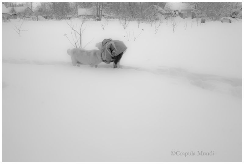 a girl and dog, lots of snow