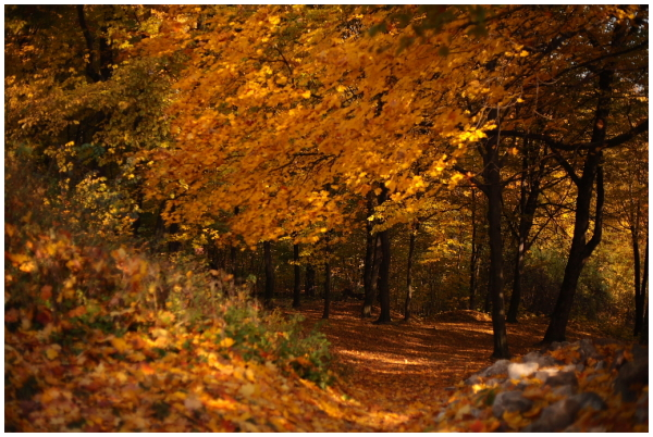autumn, forrest, leafs