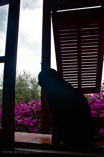 5 -Fenêtre à chat
