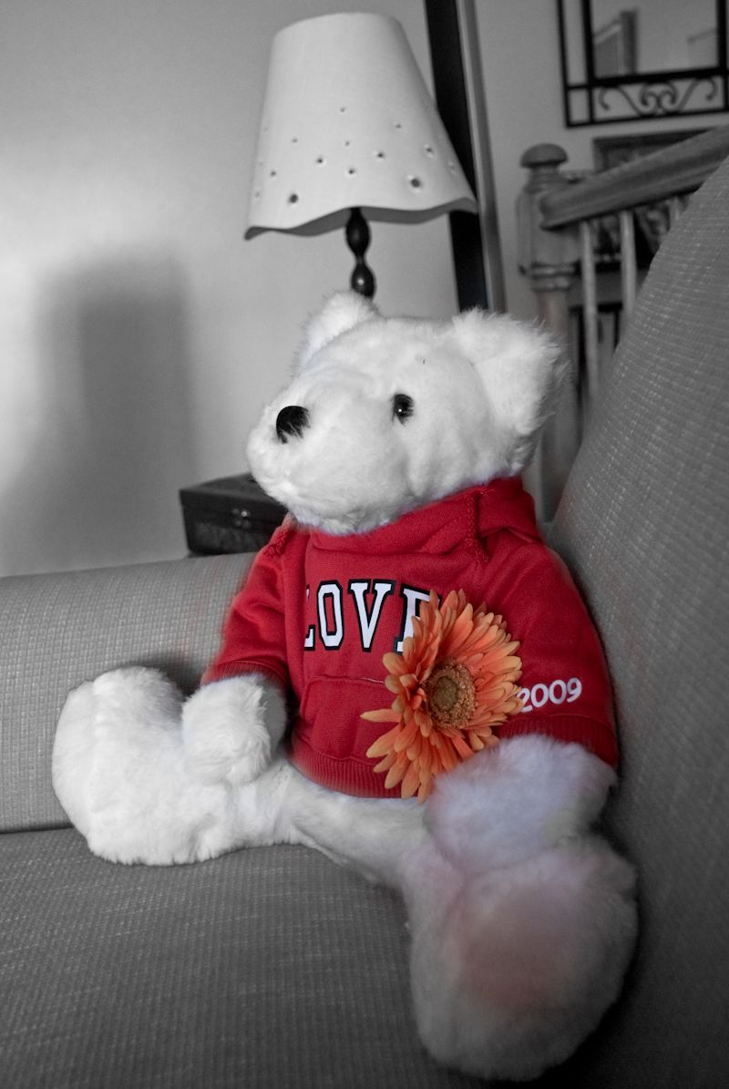 teddy love flower Valentine day