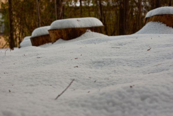 snow trunk