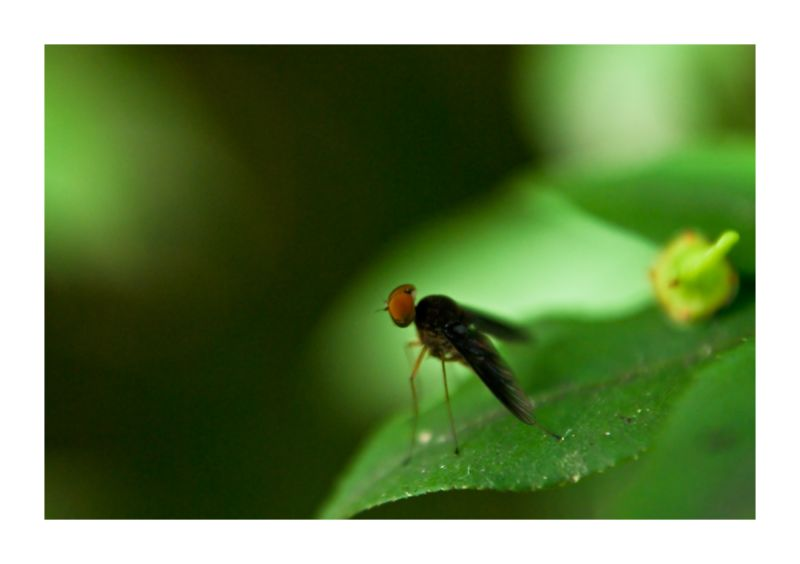 fly green insect
