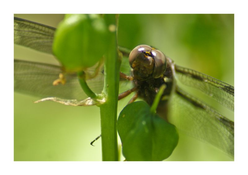 closeup, dragon, Fly, macro