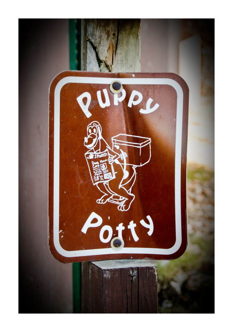 Silly Tuesday: Puppy Potty