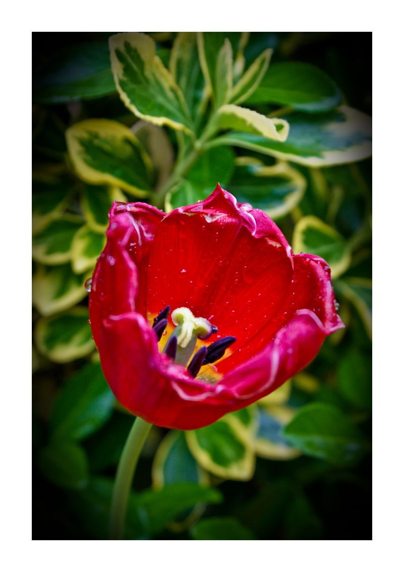 Monday Flower