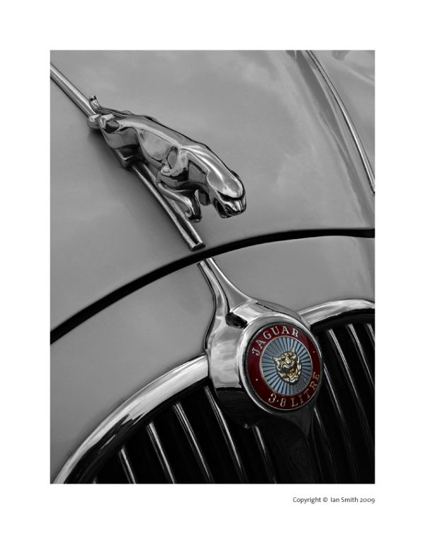 Jaguar Detail