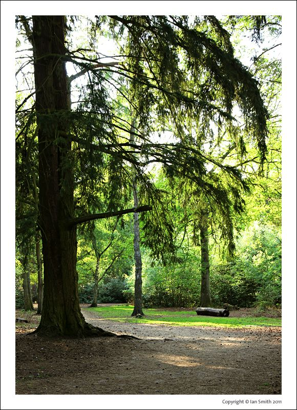 Sandringham Estate Walk
