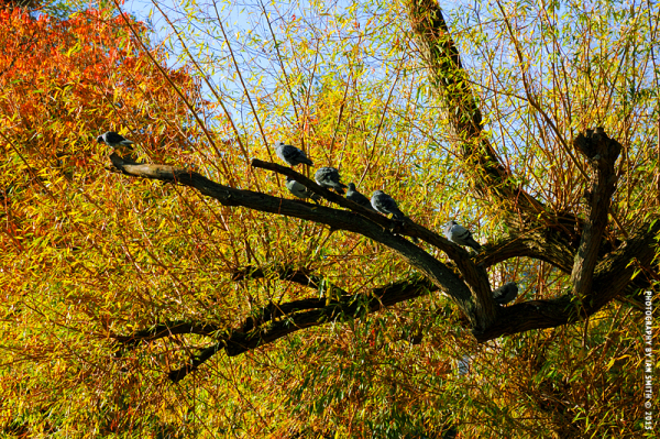 Birds in a tree in St James's Park, London