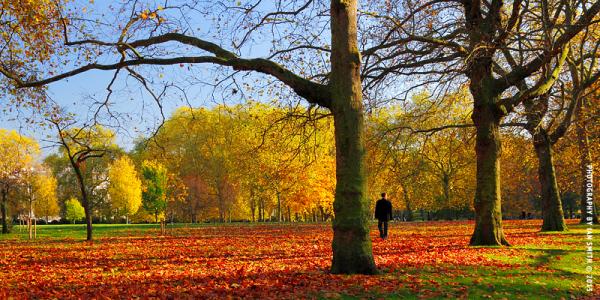 Man walking in Green Park, London