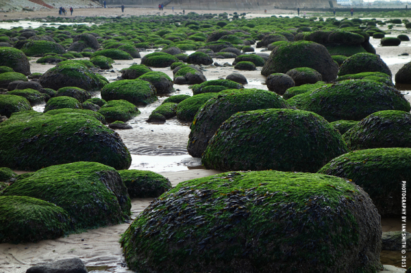 Green boulders on Hunstanton Beach