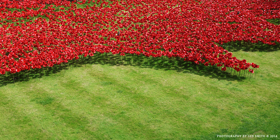 Poppies at the Tower of London 2014