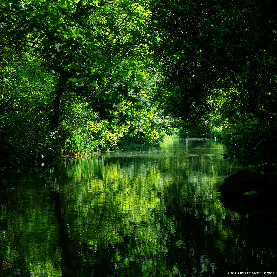 Reflections on the River Darent, Kent