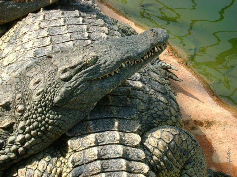 Crocodile dundee - 1