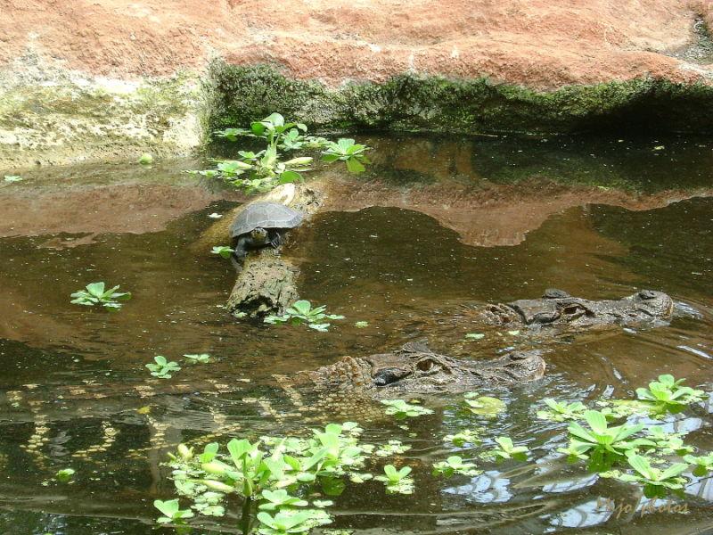 Crocodile dundee - 4
