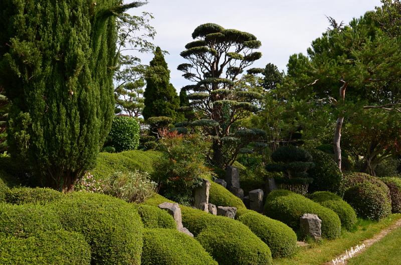 Jardin zen d 39 erik borja beaumont monteux 26 plant for Le jardin zen beaumont monteux