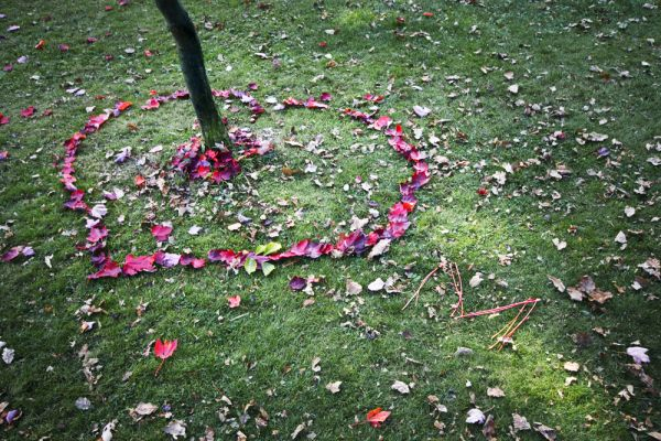 heart shaped arrangement of leaves