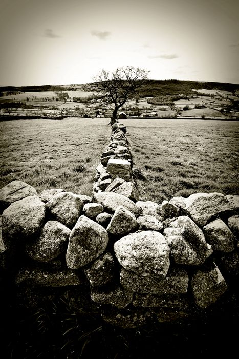 dry stone walls outside Pateley Bridge