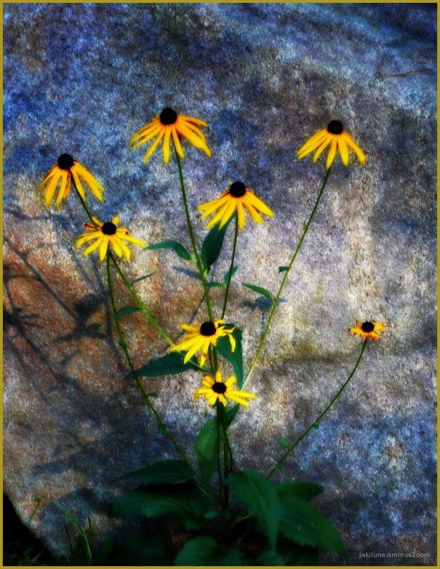 Le rocher et les fleurs