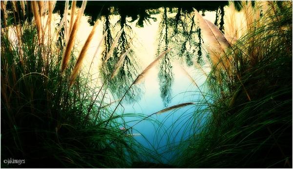 L'étang, à la tombée du jour