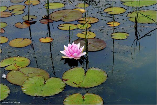 Les beautés de l'étang