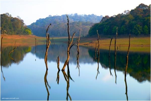 Allepey ( Kerala )