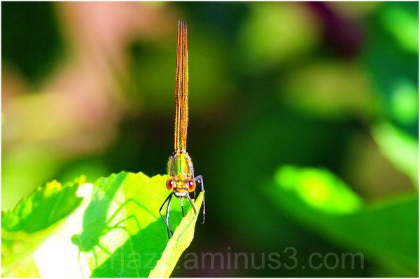 tête à tête avec une libellule