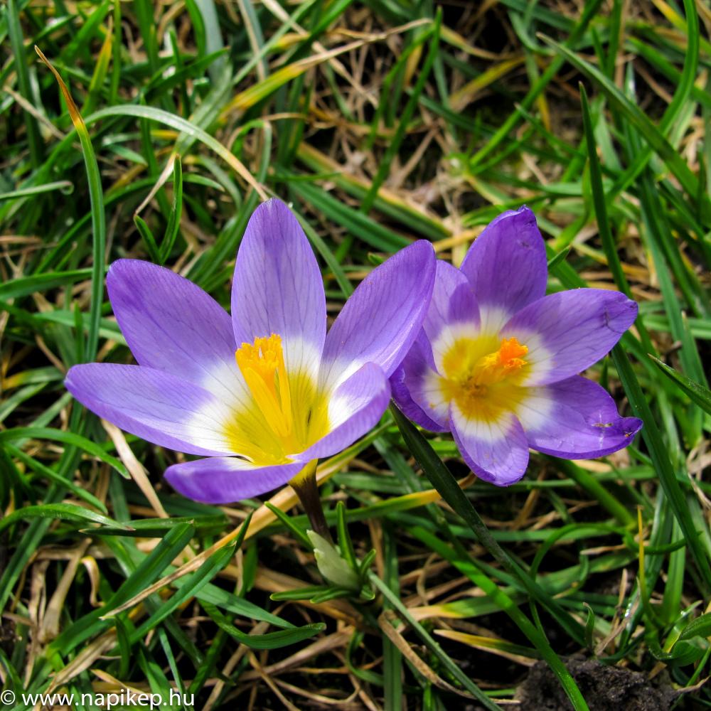 spring arrived