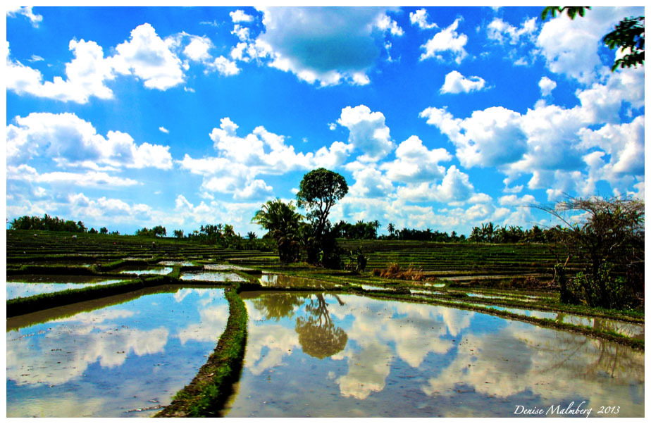 Bali inland country side reflections