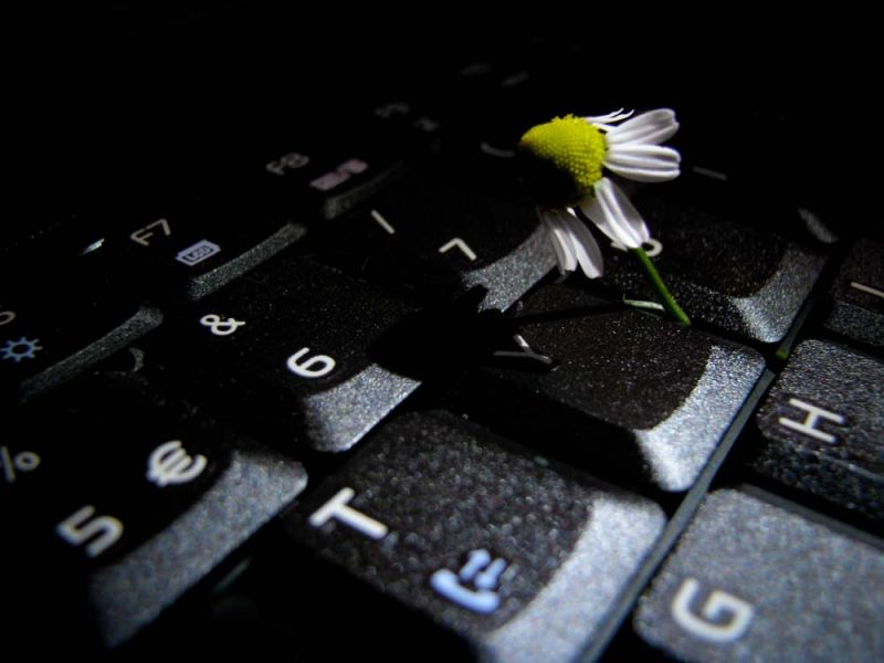 camomile in a keyboard