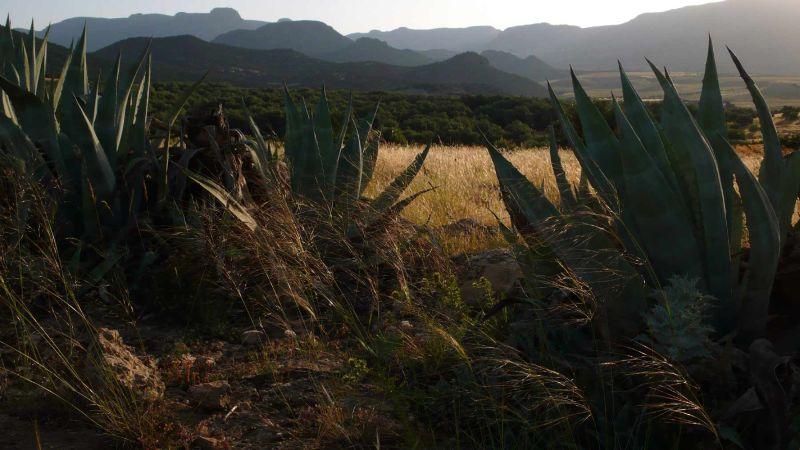 Du point de vue des agaves 2