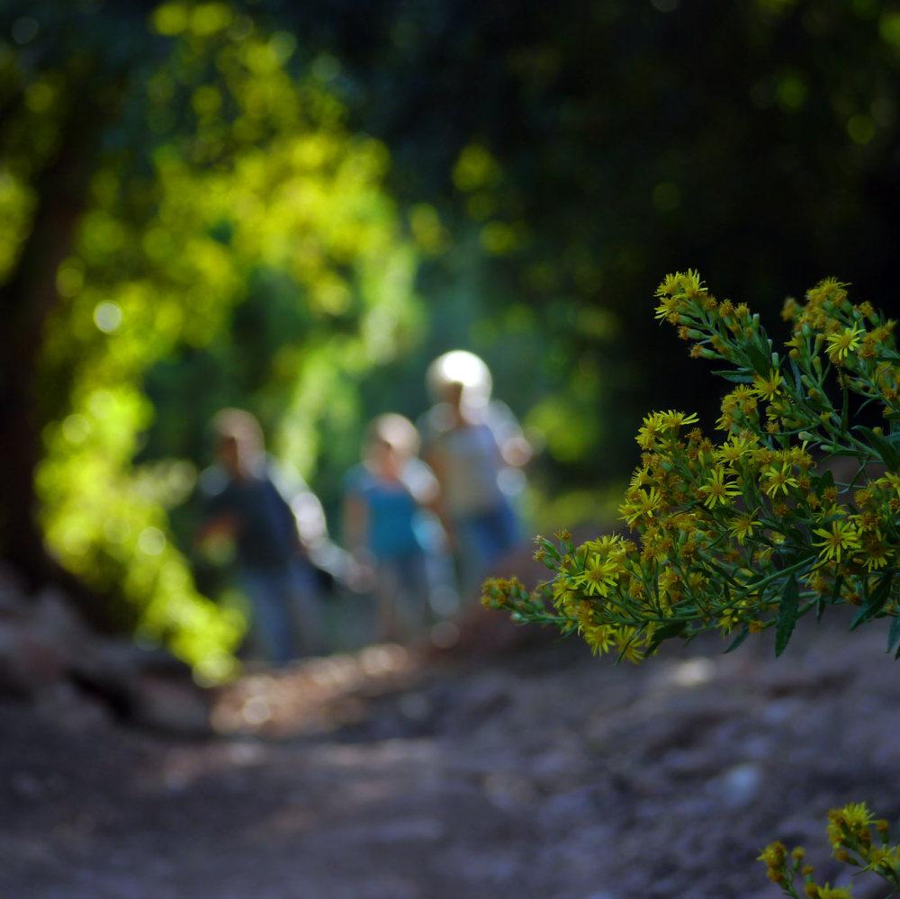 Les fleurs d'une randonnée